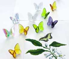 Papillon Lucky Butterfly collection