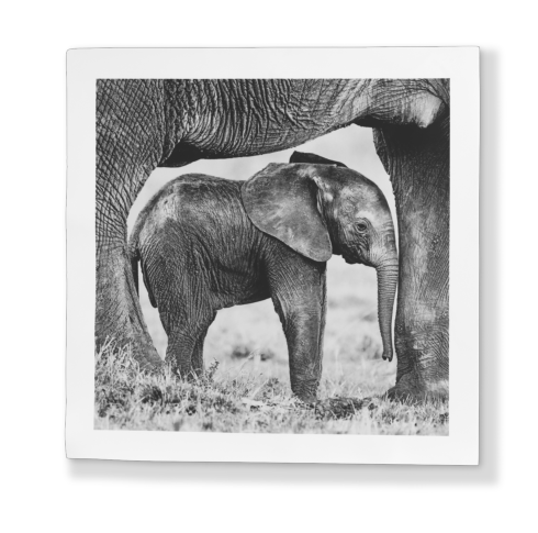 Lifestyle image 1 for Elephant Dream by Kyriakos Kaziras