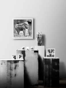 Kyriakos Kaziras Elephant dream  collection