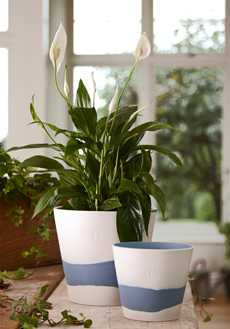 Wedgwood Burlington Pot collection with 8 products