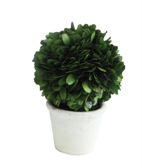 Miniature Boxwood Topiary collection with 1 products