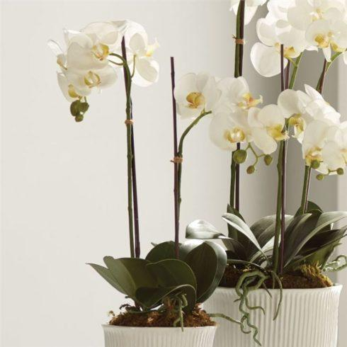 "$77.00 Phalaenopsis 23"" Artificial Drop-in"