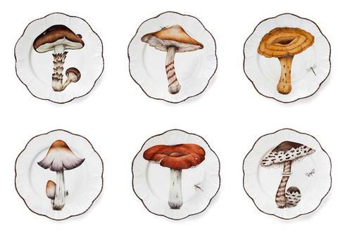 Champignon collection with 3 products