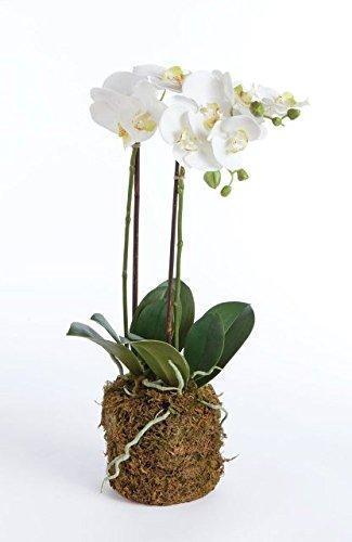Napa Home & Garden  FLOWERS Phalaenopsis Drop-in $68.95