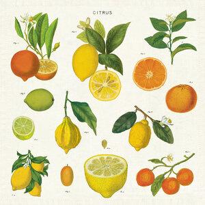 Cavallini Papers & Co.   Citrus Napkin Set of 4 $24.00