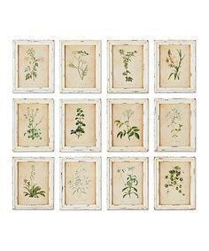 Framed Wild Flower Botanical Print collection with 1 products