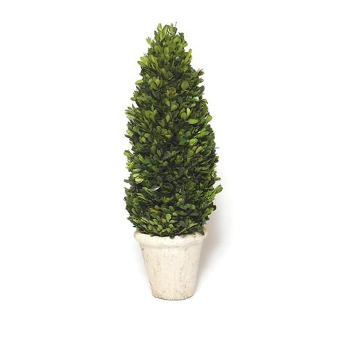 $123.95 Boxwood Cone Topiary