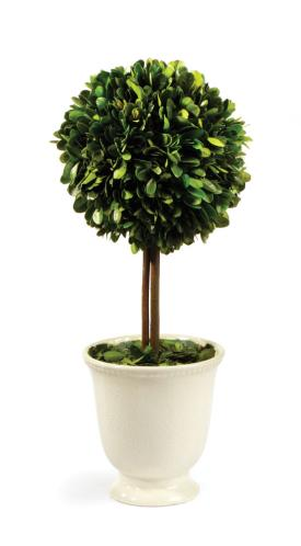 Napa Home & Garden   Boxwood Topiary in Beaded Pot $63.95