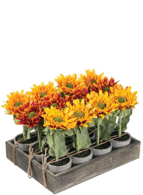 $67.95 Sunflower Potted Plant Tray