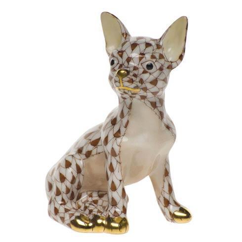 $280.00 Chihuahua
