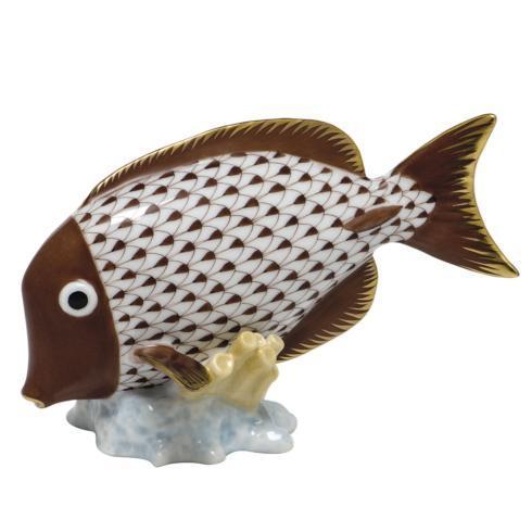 Surgeonfish - Chocolate