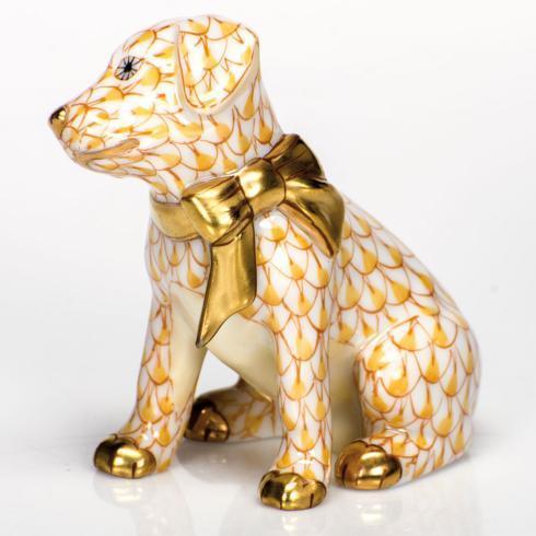 Doggie Dazzle - Butterscotch