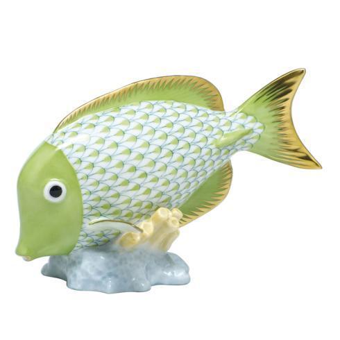 Surgeonfish - Key Lime