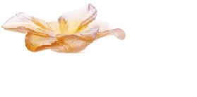 $260.00 Amber Flower