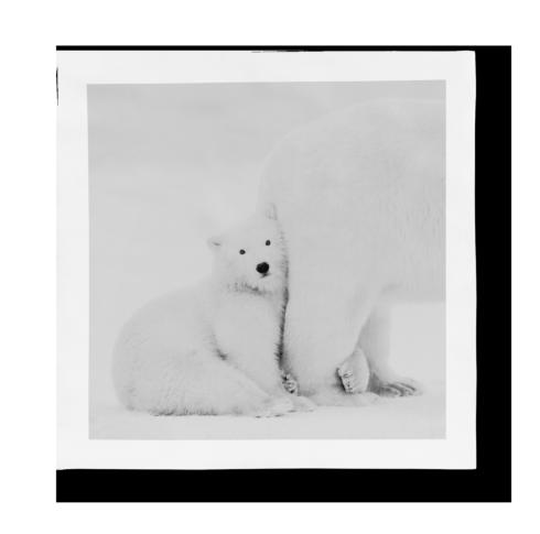 $965.00 Porcelain Panel - Mummy I Love You