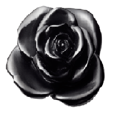 $495.00 Black flower