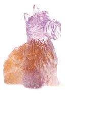 Amber Purple Highlander Terrier