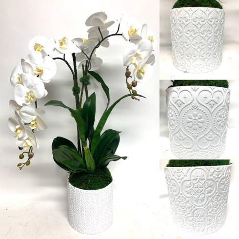$189.00 Double orchid in Scroll Pot