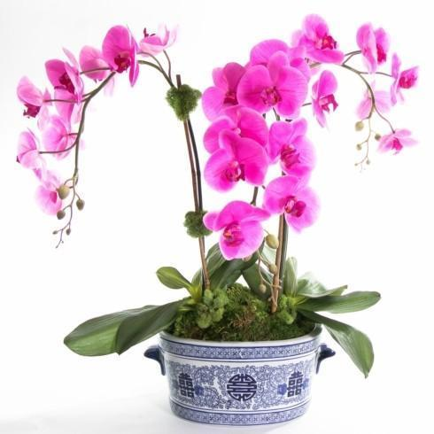 Jeffrey Bannon Exclusives   Triple orchid in Blue and white pot $329.00