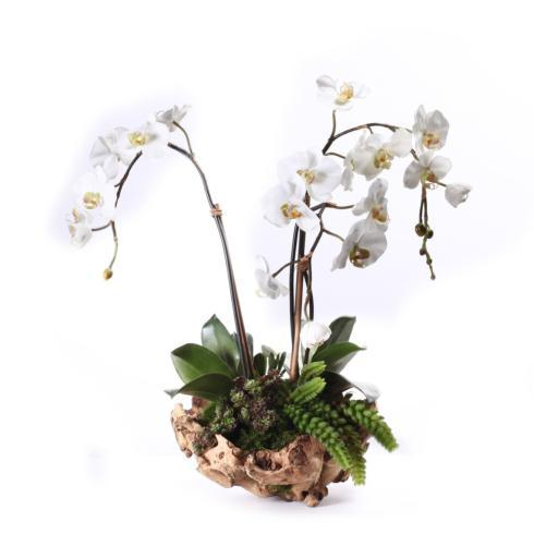 Triple Orchid in Root Bowl