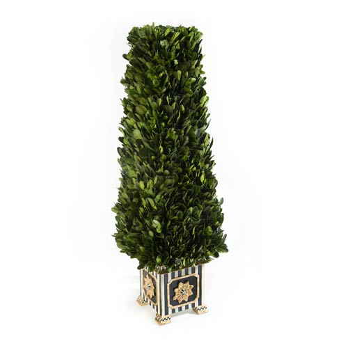 Boxwood collection with 4 products