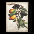 $109.00 Cashew Apple