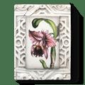 $109.00 Lotus