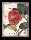 $89.95 Red Camellia