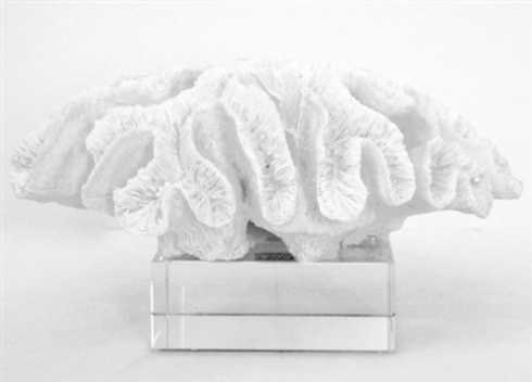 $155.00 white coral sculpture
