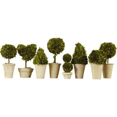 $50.50 Boxwood Topiary