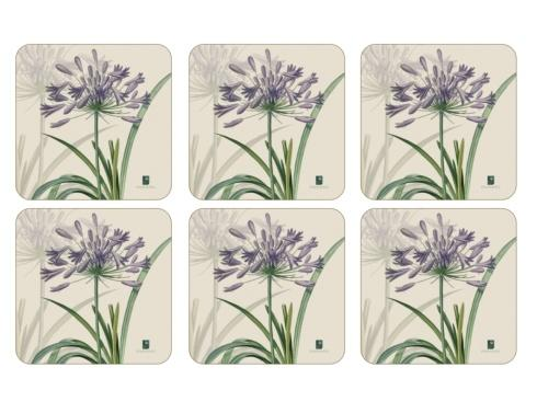 R.H.S. Agapanthus Coasters