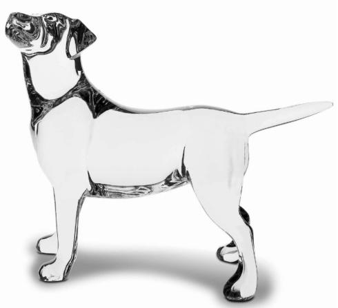 Dog, Labrador