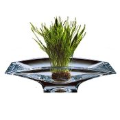 Crystal Planar Bowl collection with 1 products