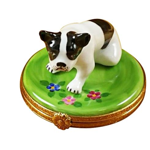 $259.00 Boston Terrier