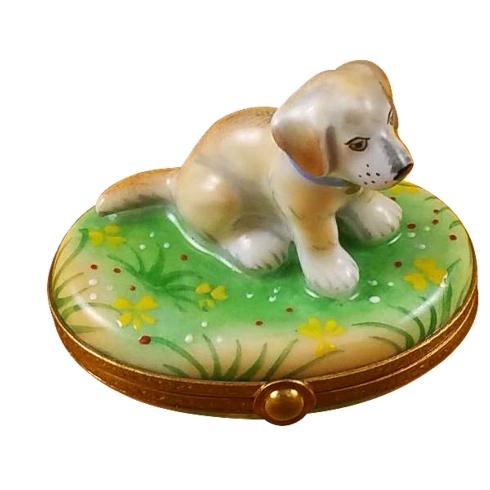 $299.00 Blond Labrador