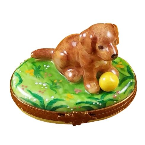$299.00 Chocolate Labrador