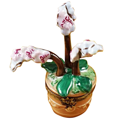 $329.00 Orchid