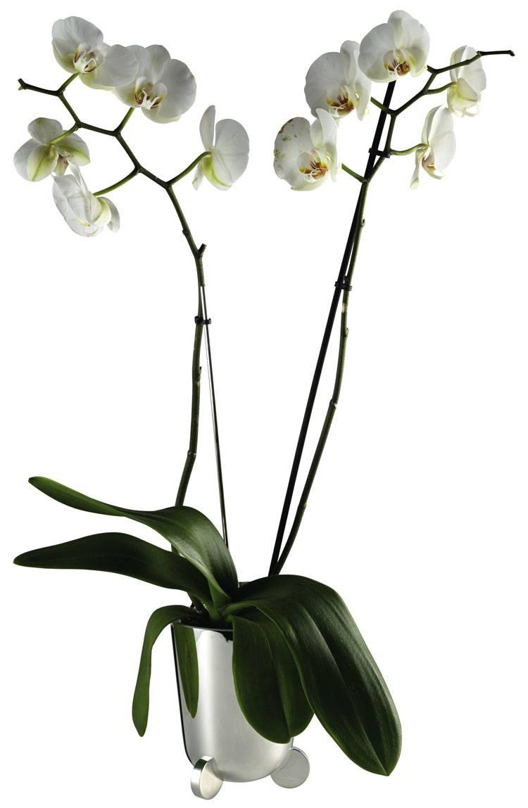 $990.00 Galet Pot For Orchid