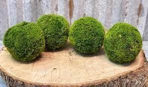 Forever Green Art Moss Ball Medium