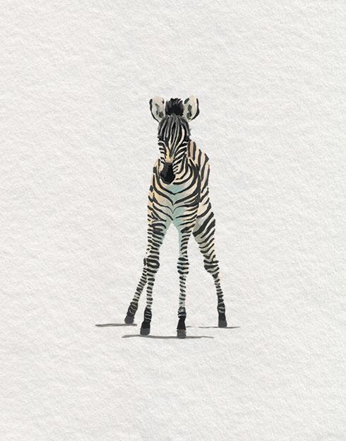 $40.00 11x14 Baby Zebra Nursery Art Print