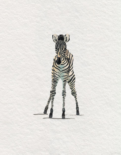 $30.00 8x10 Baby Zebra Nursery Art Print