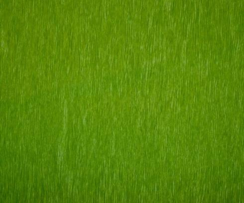 $23.00 Bistro Green - Set of 12