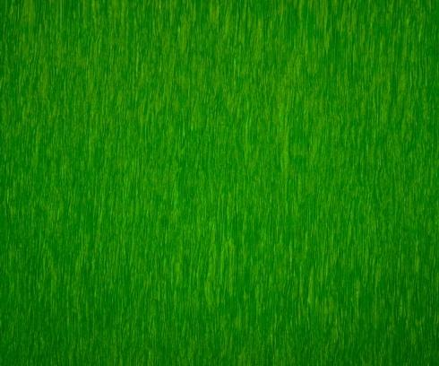 Lime Green - Set of 12