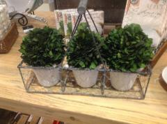K & K Interiors   Boxwood Trio $72.00