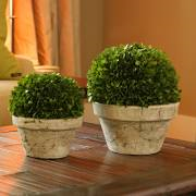 Napa Home & Garden   Boxwood Medium $58.00