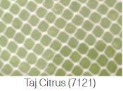 $216.00 Medium Oval Tray Citrus Taj