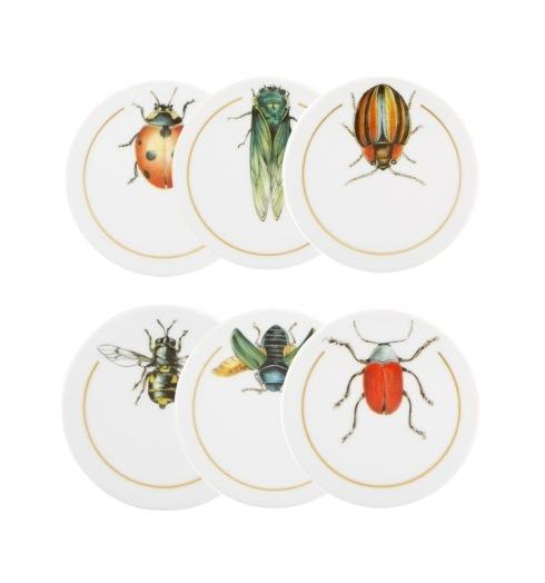 Insects Coasters – Set of 6 collection with 1 products