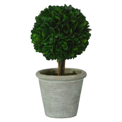 Vieuxtemps Exclusives   Preserved Boxwood Topiary $38.00