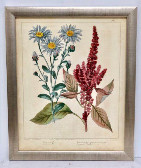 $390.00 Garden Flora Pl. 7 Framed Print