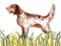 30 Hunting Dog Folded Notecards